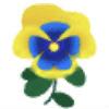 黄青パンジー