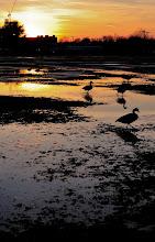 Photo: Geese