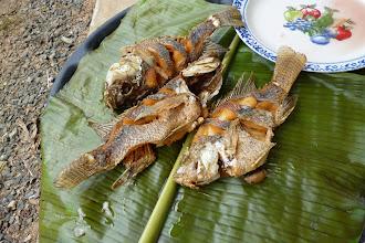 Photo: Leckere Tilapia, gefangen in den Familieneigenen Fischteichen, gekocht oder eher fritiert über offenem Feuer, gegessen mit größter Freude!