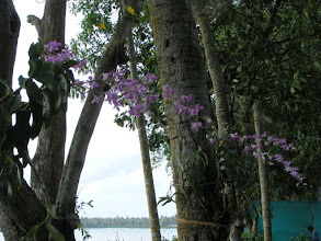 Photo: The orchids delighted us both