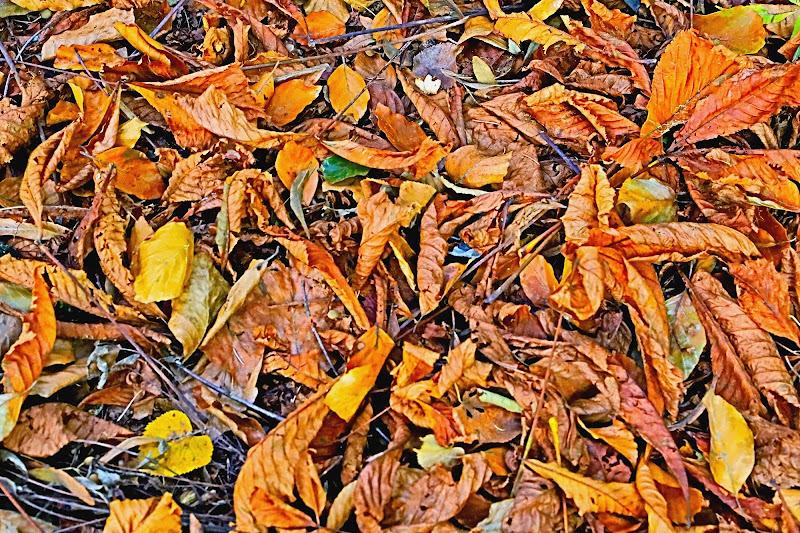 Oliage...Orange Foliage di tetopedro