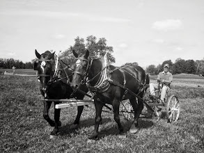 Photo: Black and white photo of two black horses plowing a field at Carriage Hill Metropark in Dayton, Ohio.