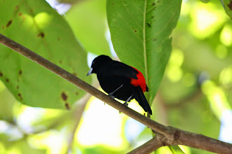 Photo: Tanager
