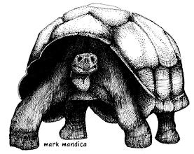 Photo: Geochelone elephantopus | Galapagos tortoise