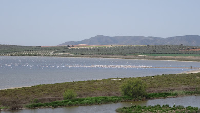 Photo: A spit of land provides a gathering place for a few thousand flamingos