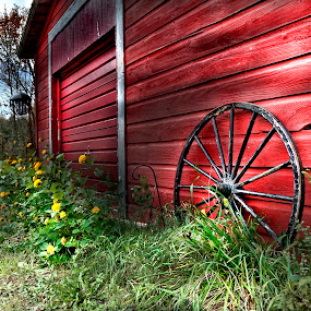 Barnside by Irene Orloff - Nature Up Close Flowers - 2011-2013 ( barn, flowers )