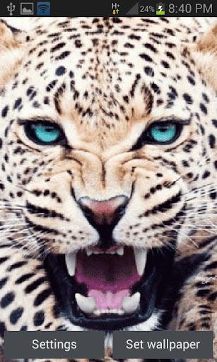 Panther Roaring LWP