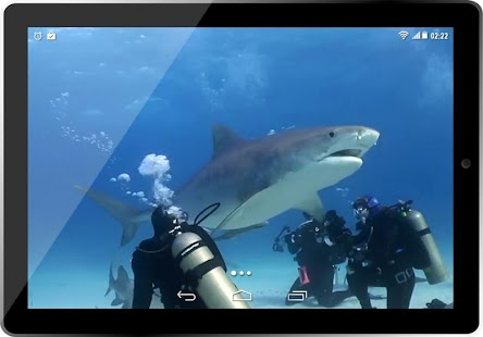 Real Tiger Shark 3D HD LWP for PC-Windows 7,8,10 and Mac apk screenshot 5