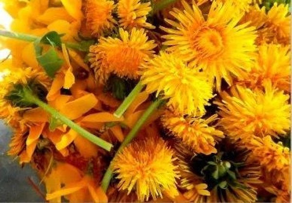 Pick 6-8 cups of forsythia and dandelion blooms, just the blooms. Boil enough water...