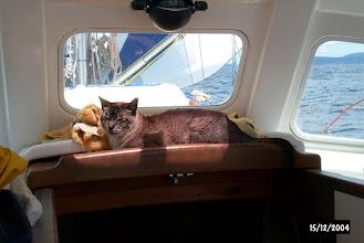 Photo: Ship's cat on watch