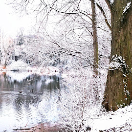 Winter  by Abhinav Ganorkar - City,  Street & Park  City Parks ( winter, bench, park, snow, lake,  )