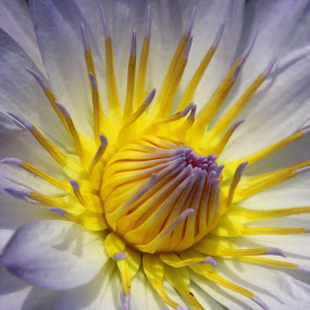 by Key Exprojjak - Nature Up Close Flowers - 2011-2013