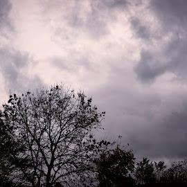 Storm Calum by James Johnstone - Landscapes Weather ( storm, clouds, trees )