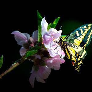 New-Butterfly-2063-no-label.jpg