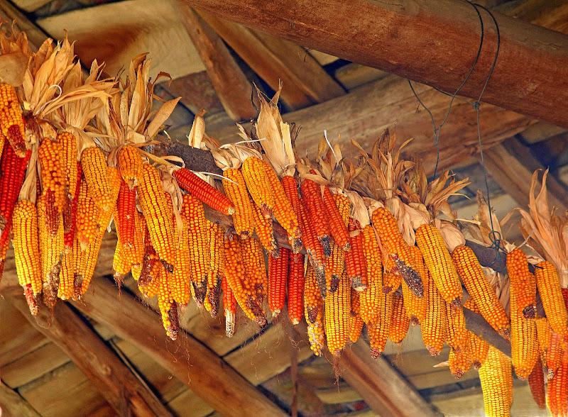 L'essiccamento del mais. di Naldina Fornasari