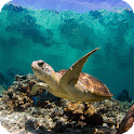 Turtle Live Wallpaper icon