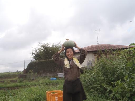 たね交換会でもらった長野県の糸萱かぼちゃ。5kgありました!