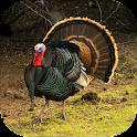 Turkey Calling & Turkey Sounds icon