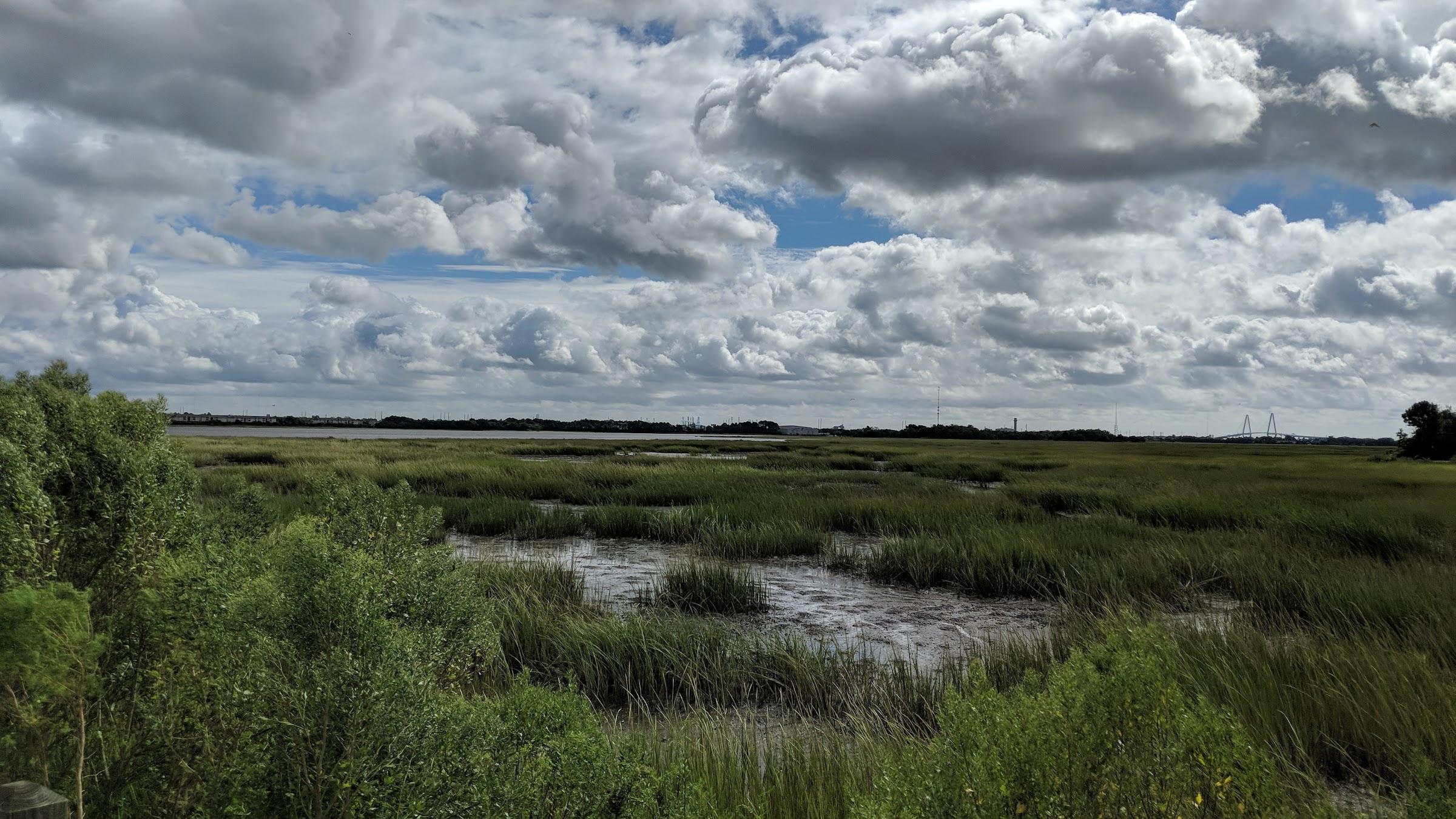 Ashley River marsh