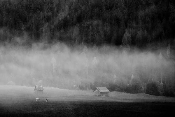 Nebbia mattutina sui pascoli di Salvatore Massaiu