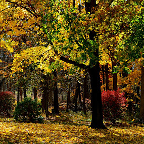 Autumn Woods by Carl Testo - Landscapes Forests ( autumn, forest, light )