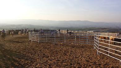Photo: Ici on voit la majorité des cavaliers attendant le début de l'épreuve et leur tour.