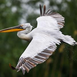 F by Adrian Mitu - Animals Birds