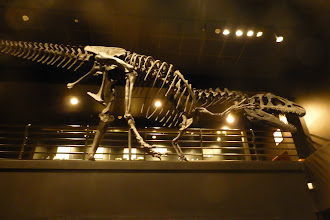 Photo: Allosaurus, from the Jurassic Period. Despite the movie name, Tyrannosaurus was from the Cretaceous Period, nearly 60 million years later.