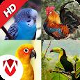 100 Bird sounds : Ringtones, Wallpapers apk