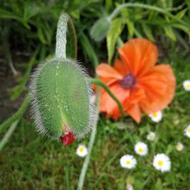 by Karl Erik Straarup - Flowers Flower Gardens