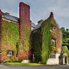 Bodidris Hall by Jim Keating - Buildings & Architecture Public & Historical ( bodidris, hall, wales, ivy, welsh,  )