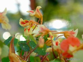 Photo: 100% Edible Flower!