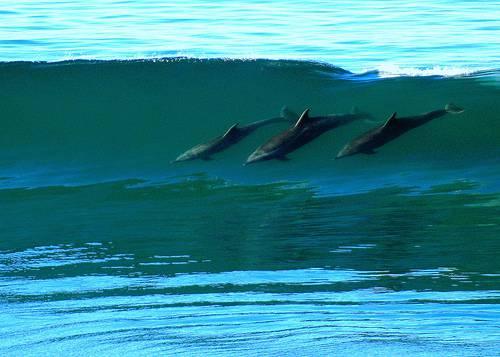 dolphin_(1).jpg
