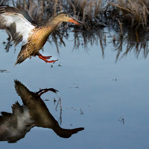Reflection_by_Jerry_Fleury-2.jpg