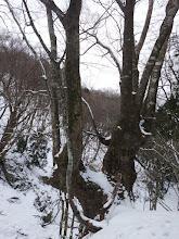 立派な木が多い