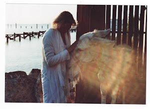 Photo: Vor Sonnenaufgang,am Strand von Safaga in Ägypten.Inaara und der weisse Esel..... Heilende Strahlen .....