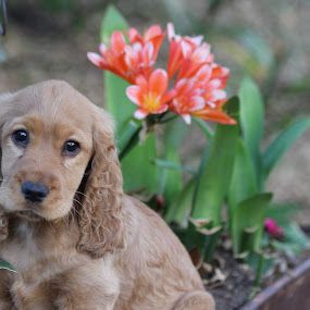 by Lené Botha - Animals - Dogs Puppies