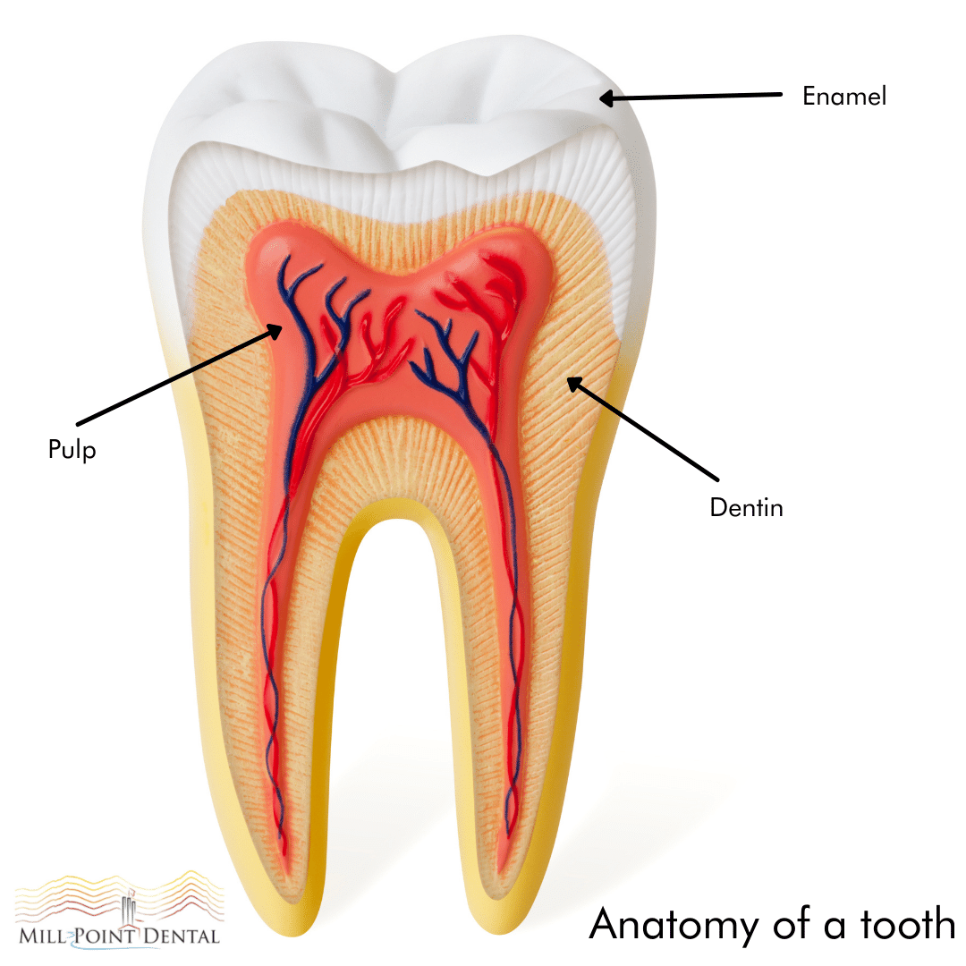 anatomy of a tooth for understanding cavity prevention