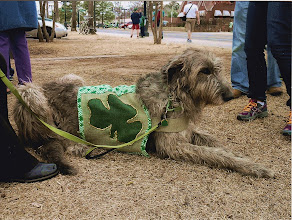 Photo: 3-15-2014 Wendy relaxing after St Patrick's Parade