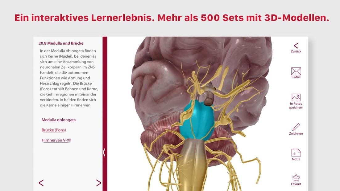 Wunderbar Anatomie Wortsuche Zeitgenössisch - Menschliche Anatomie ...