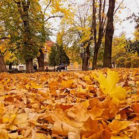 by Gino Libardi - City,  Street & Park  City Parks ( autumn leaves, park, autumn, autumn colors )