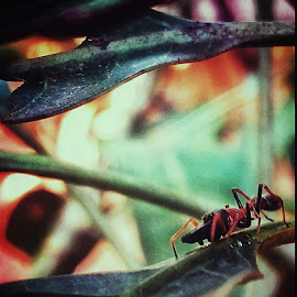 Ant by Rajesh Mondal - Animals Insects & Spiders ( mobilography, nature, ant )