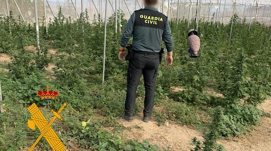 Toque de atención de la Fiscalía: los delitos de drogas se disparan en Almería