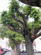 Photo: Странное дерево - что это за красные штуки, мы так и не выяснили