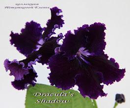 Photo: Dracula's Shadow