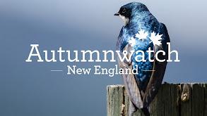 Autumnwatch New England thumbnail