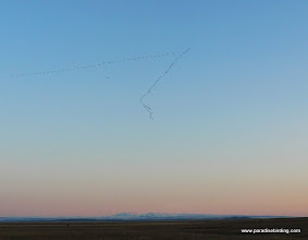 Photo: Skein of Snow Geese in flight, Steens Mtn in the distance