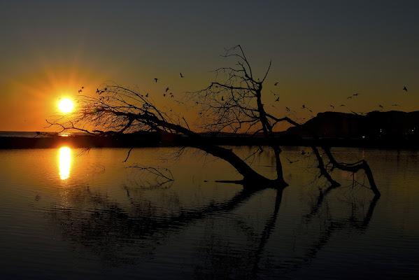 L'Oasi al tramonto  di Ocram