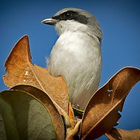 by Edwin Madera - Animals Birds