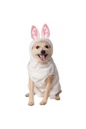 Hunddräkt, Kanin
